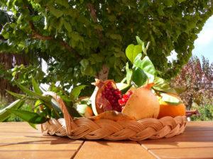 Fruits of the garden. Frutta del giardino. Früchte des Gartens